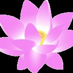 flower-159951_960_720